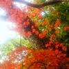 真っ赤な京都
