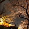 夜桜@上野公園