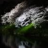 夜桜@九段下