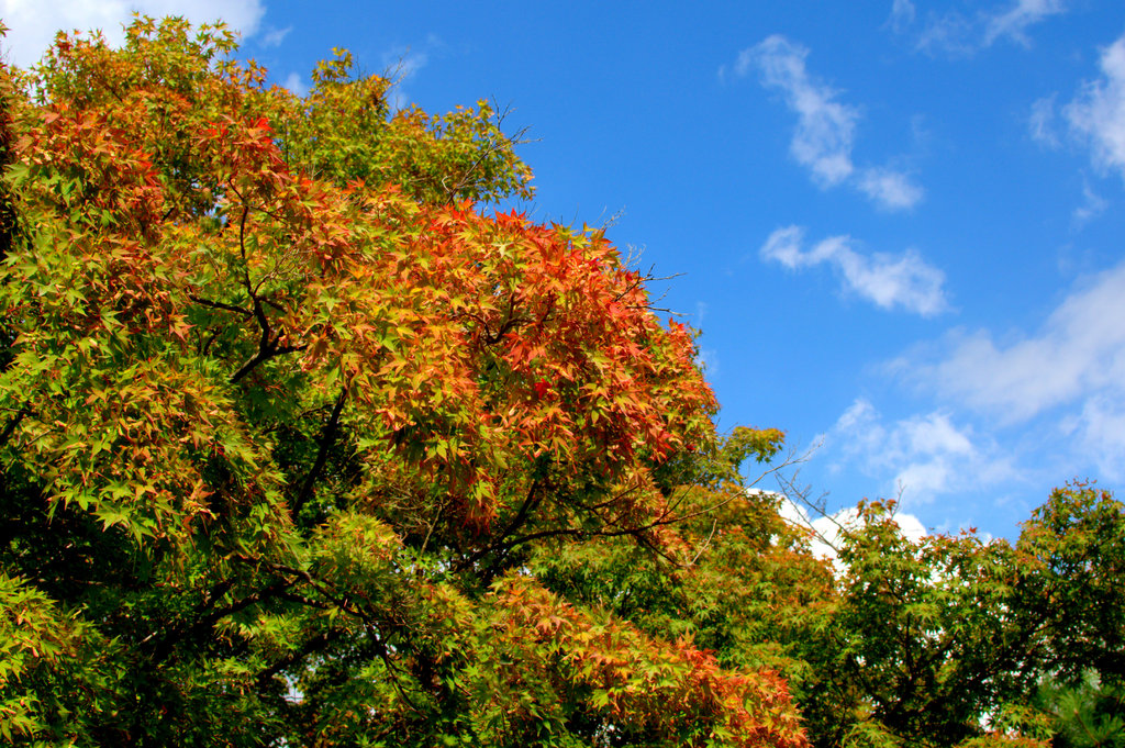 秋までもう少し