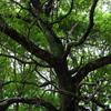 入り乱れる枝葉