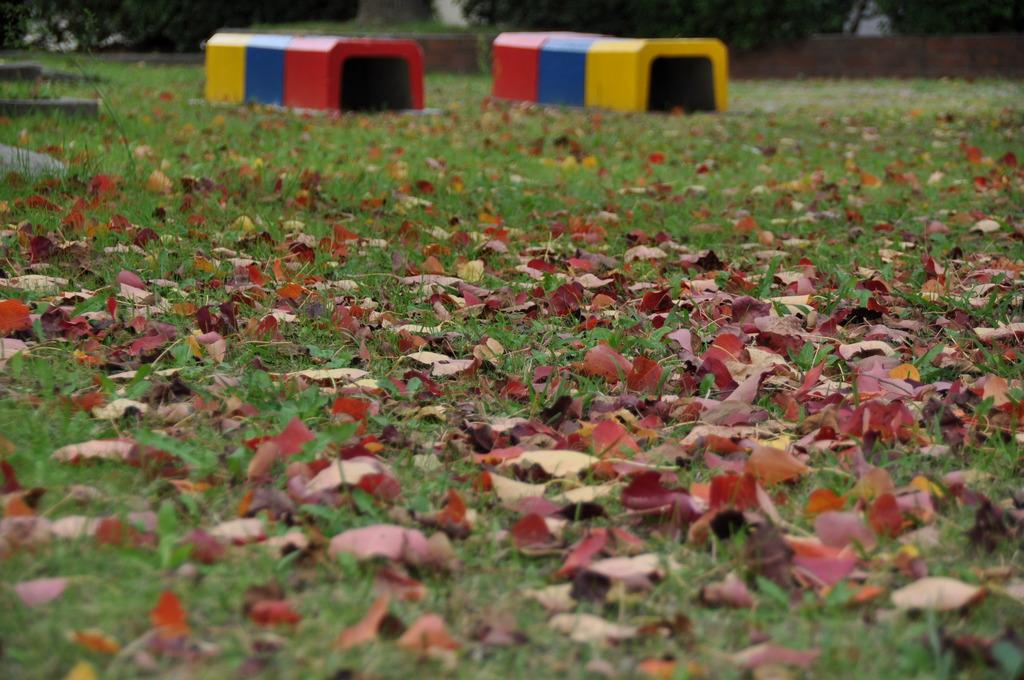 落ち葉の公園