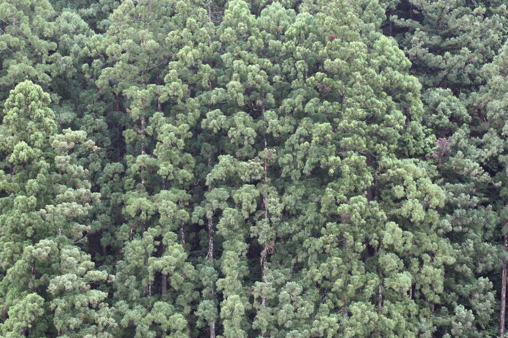 和歌山の森