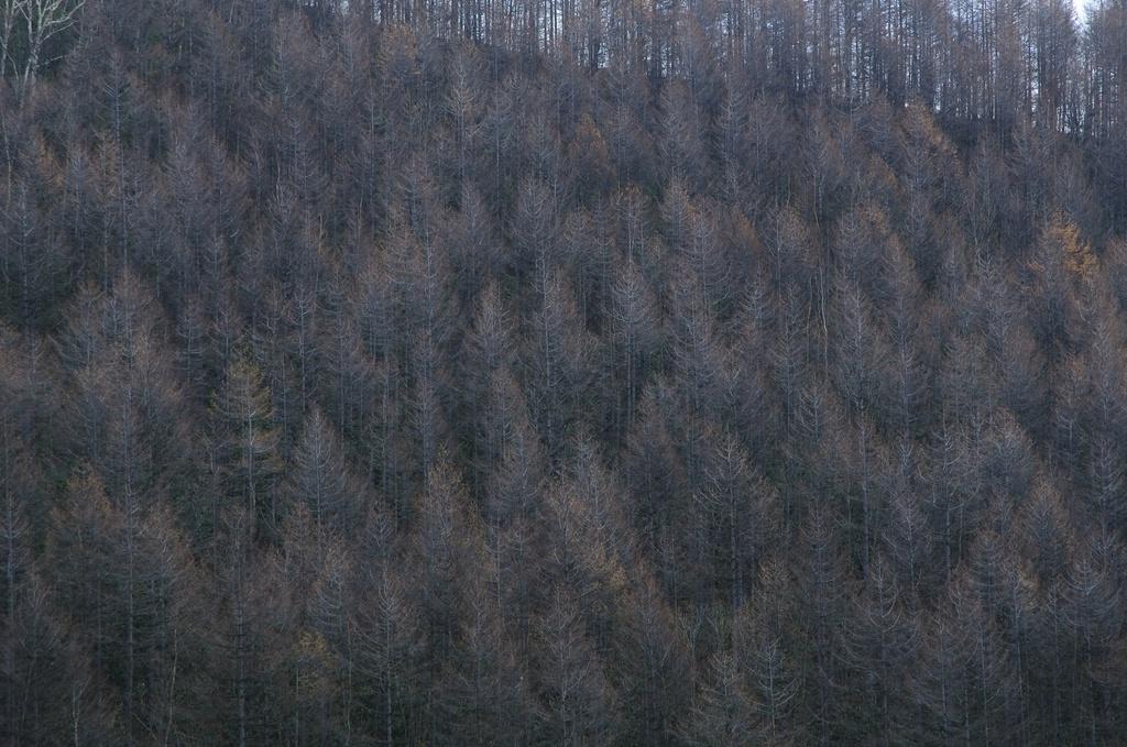晩秋の山と木々と