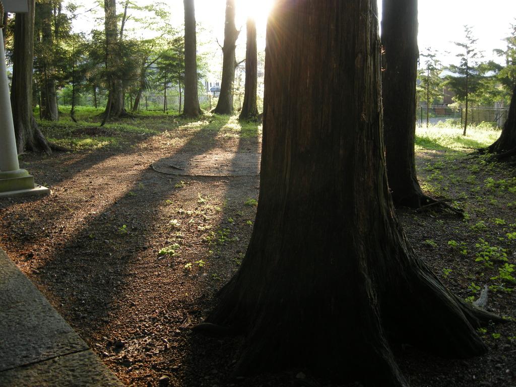 光線遮る、木陰長く