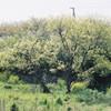 ひかりの樹