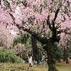 桜の森ファミリー