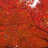 2009年秋模様Ⅱ