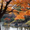 小石川後楽園の紅葉4