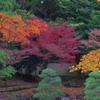 小石川後楽園の紅葉2