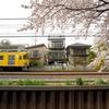 西武線と桜