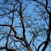 枝の上にハト