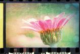 """Flower"""""""