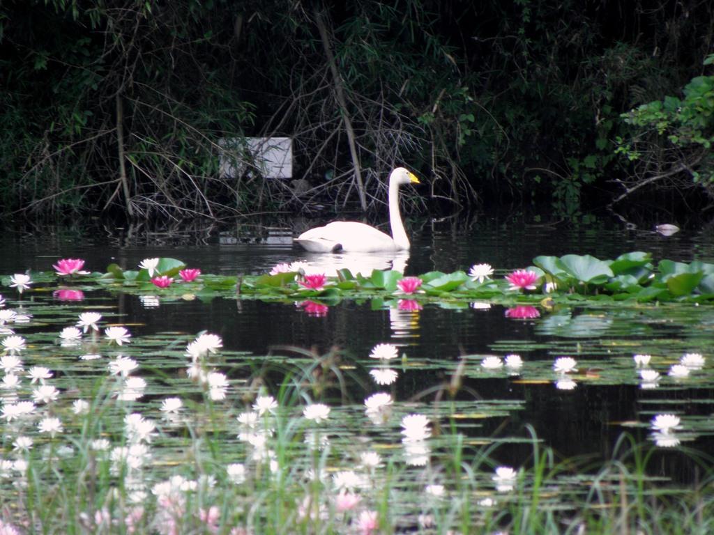 睡蓮と水と水鳥