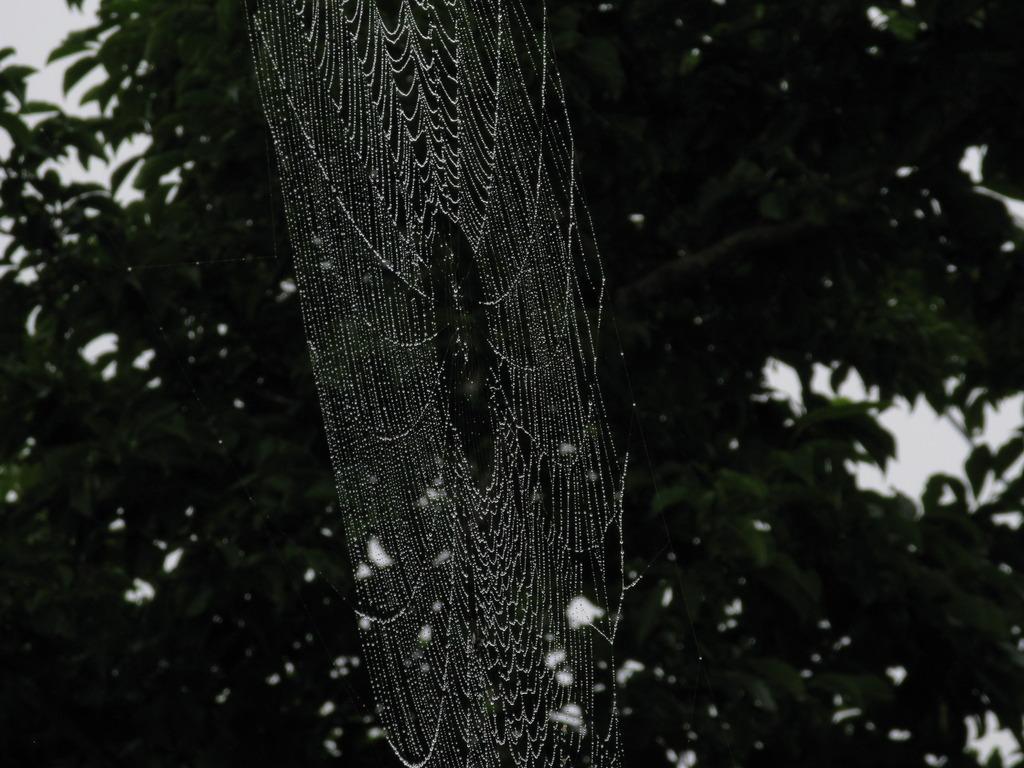 蜘蛛の巣 005