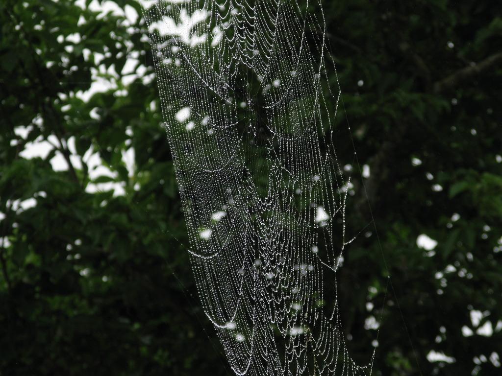 蜘蛛の巣 004