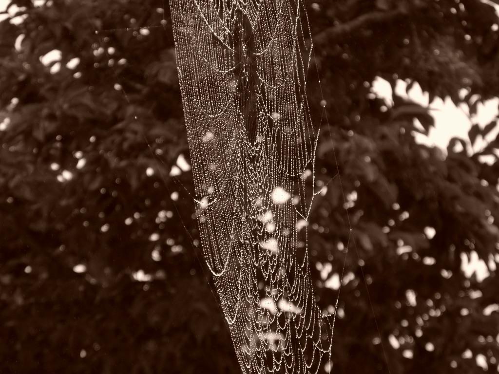 蜘蛛の巣 008
