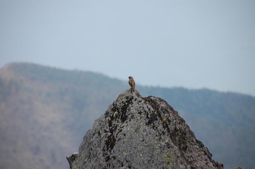 孤高の小鳥