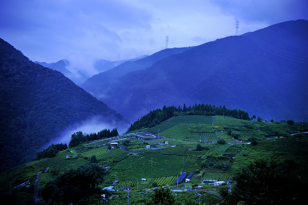 山上の茶畑