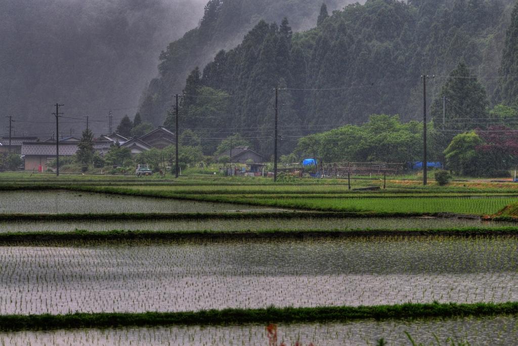 村に降る雨