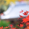 秋深まる寺