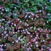 小さい花達