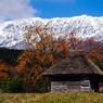 御机集落 柿と茅葺き小屋