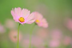 花色は虹のごとく