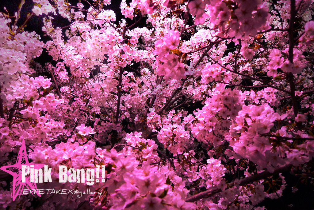 Pink Bang!!