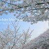 Snow white blossom