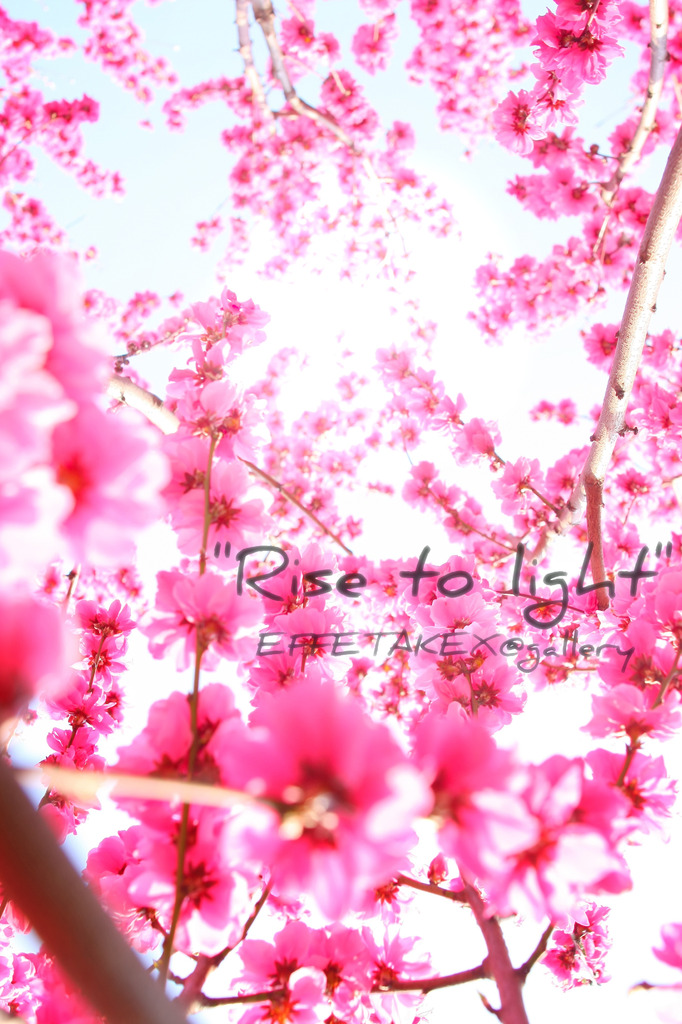 Rise to Light