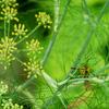 蜂、覗き見る