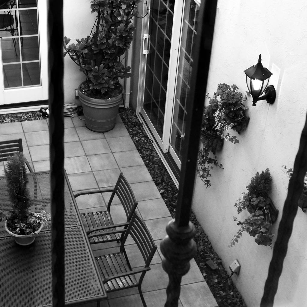 中庭を望む