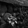 石垣と鉄線