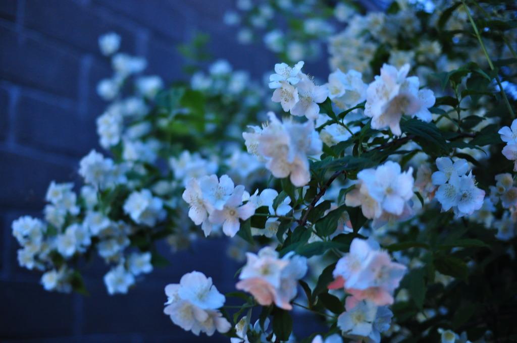 この花の名前って・・・・???
