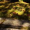 木漏れ落葉に魅せられて