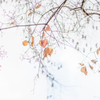 暮れの秋・・・♡