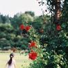薔薇の庭で
