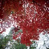興福寺の紅葉2