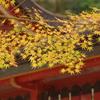 高雄神護寺1