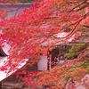 高雄神護寺3