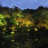 高台寺のライトアップ