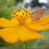 蝶、止まる