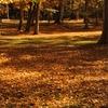 落葉の公園1