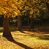 落葉の公園2