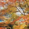 山寺の紅葉