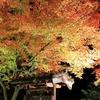 秋の夜の夢