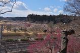 【ご紹介フォト】日本三名園 偕楽園 梅まつり④