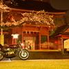 日本の花 日本の名車