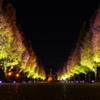 靖国神社ライトアップ